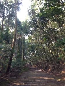 平戸山林道